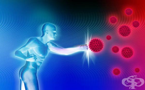 Устройство и функция на имунната система - изображение