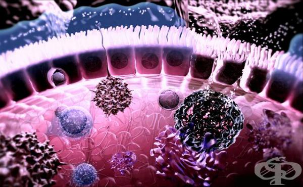 Роля на Главния комплекс на тъканна съвместимост в имунния отговор - изображение