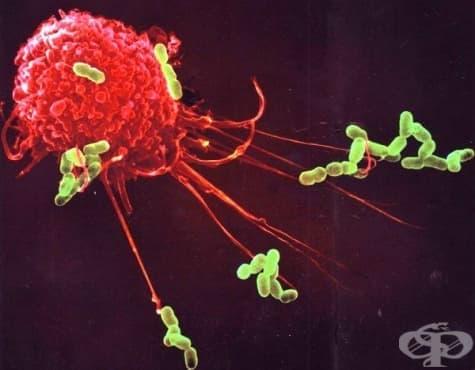 Инфекция и имунитет - изображение