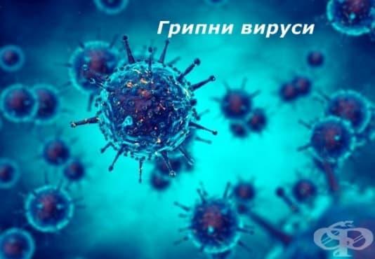 Класификация на вирусите - изображение