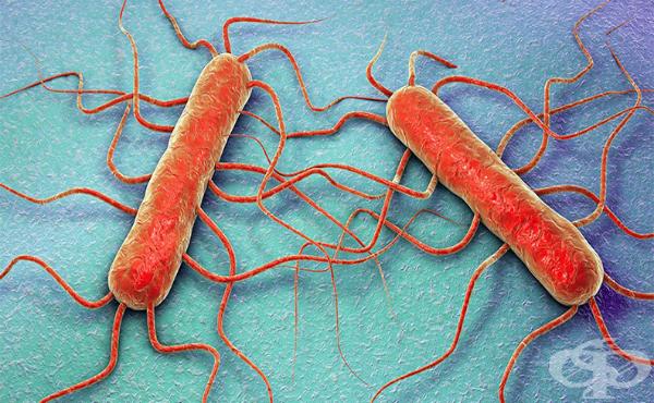 Листерия моноцитогенес (Listeria monocytogenes) - изображение
