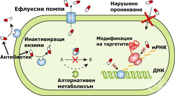 Механизми на резистентност към отделните групи противомикробни препарати - изображение