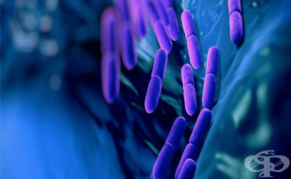 Защитна роля на нормалната микрофлора - изображение