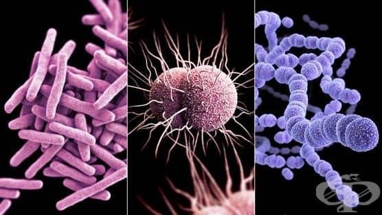 Микробиологична характеристика на инфекциите по системи - изображение