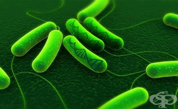 Носители на генома при бактериите - изображение