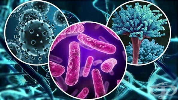 Обща микробиология - изображение