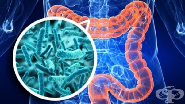 Промени в нормалната микрофлора при лечебни въздействия - изображение