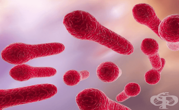 Анаеробни спорообразуващи бактерии (Род Clostridium) - изображение