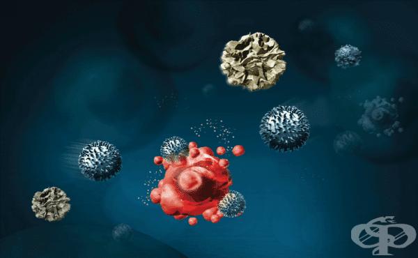 Клетъчно-медииран имунитет - изображение