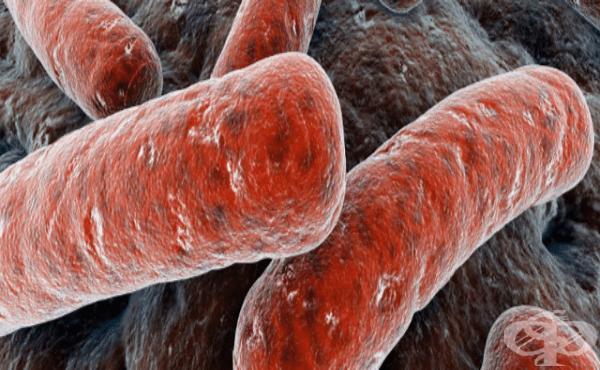 Уреаплазма уреалитикум (Ureaplasma urealyticum) - изображение