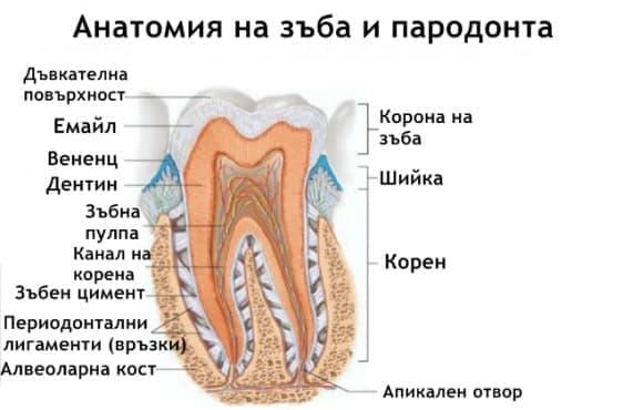 Заболявания на пародонта - изображение