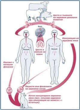 Инфекциозни и паразитни болести на майката, класифицирани другаде, но усложняващи бременността, раждането и послеродовия период МКБ O98 - изображение