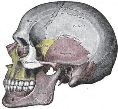 Счупване на черепа и лицевите кости МКБ S02 - изображение