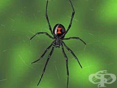 Контакт с отровни паяци МКБ X21 - изображение
