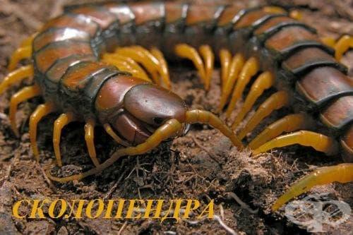 Контакт със стоножки и отровни многокраки (тропически) артроподи МКБ X24 - изображение