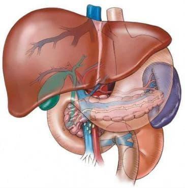 Вродени аномалии на жлъчния мехур, жлъчните пътища и черния дроб МКБ Q44 - изображение