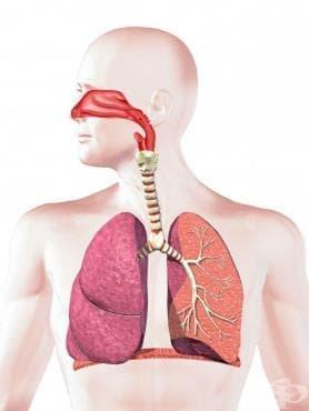 Карцином in situ на средното ухо  и дихателната система МКБ D02 - изображение