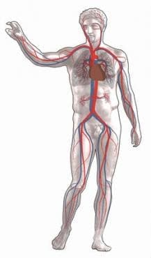 Препарати, действащи предимно  на сърдечно-съдовата система МКБ Y52 - изображение