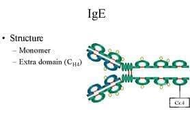 Синдром на хиперимуноглобулин E [IgE] МКБ D82.4 - изображение
