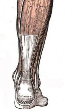 Увреждания на синовиалните обвивки и сухожилията МКБ M65-M68 - изображение