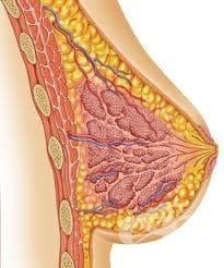 Болести на млечните жлези МКБ N60-N64 - изображение