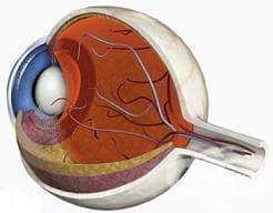 Болести на склерата, роговицата, ириса и цилиарното тяло МКБ H15-H22 - изображение