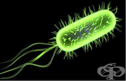 Неонатален сепсис, причинен от Escherichia coli МКБ P36.4 - изображение