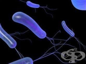 Неонатален сепсис, причинен от други бактерии МКБ P36.8 - изображение