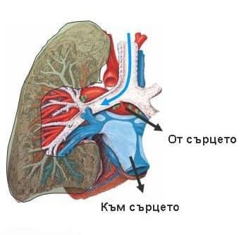 Болести на дихателната система МКБ J00-J99 - изображение