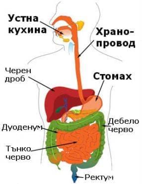Други уточнени вродени аномалии на храносмилателната система МКБ Q45.8 - изображение