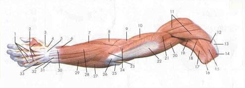 Болести на меките тъкани МКБ M60-M79 - изображение