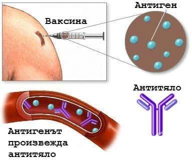 Бактериални ваксини МКБ Y58 - изображение