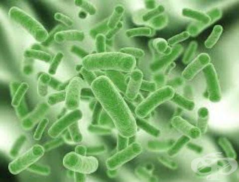 Бактериална инфекция с неуточнена  локализация МКБ A49 - изображение