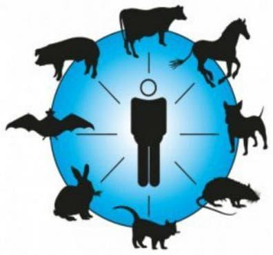 Бактериални зоонози МКБ A20-A28 - изображение
