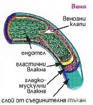 Системни увреждания на съединителната тъкан МКБ M30-M36 - изображение