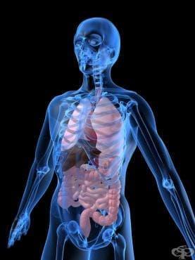 Отравяне с хормони, синтетичните им заместители и антагонисти,  некласифицирани другаде МКБ T38 - изображение