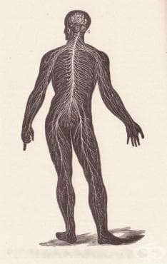 Болести на нервната система МКБ G00-G99 - изображение
