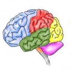 Други вродени аномалии на нервната  система МКБ Q07 - изображение