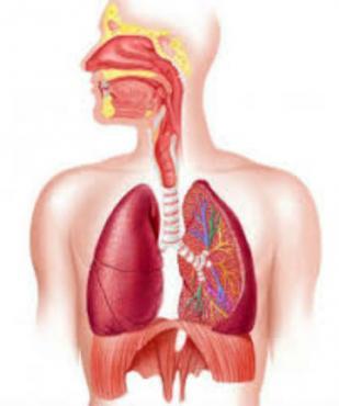 Бронхит и пневмонит, причинени от химични вещества, газове, дим и пари МКБ J68.0 - изображение