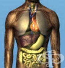 Термични и химични изгаряния  на други вътрешни органи МКБ T28 - изображение