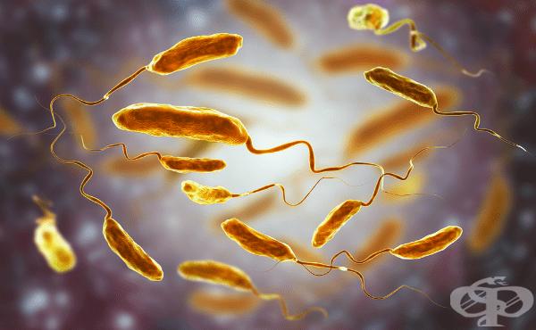 Холера МКБ A00 - изображение