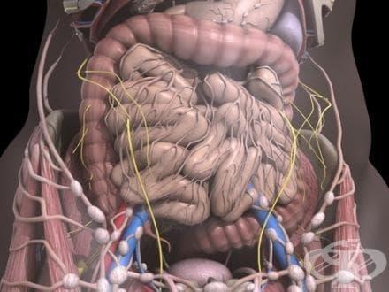 Други болести на червата МКБ K63 - изображение