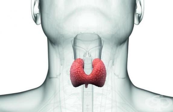 Други болести на щитовидната жлеза МКБ E07 - изображение