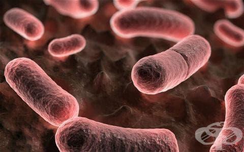 Други форми на чума МКБ A20.8 - изображение