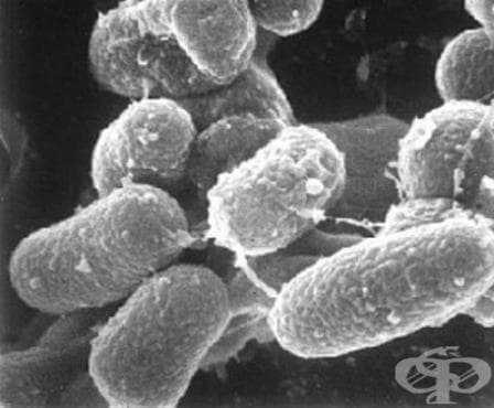 Други инфекции, предизвикани от Mycobacterium МКБ A31.8 - изображение