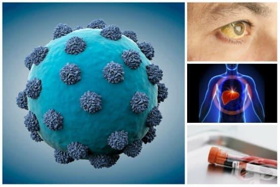 Други остри вирусни хепатити МКБ B17 - изображение