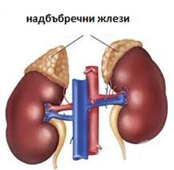 Други разстройства на надбъбречните жлези МКБ E27 - изображение