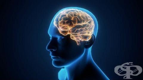 Други увреждания на главния мозък при болести, класифицирани другаде МКБ G94* - изображение