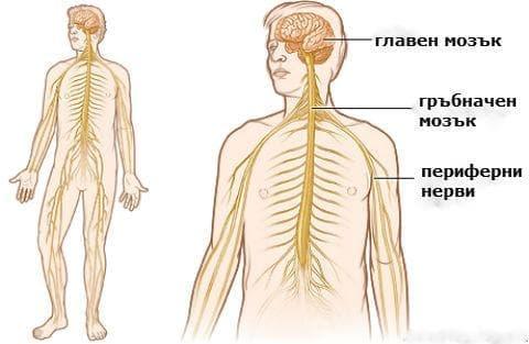 Други увреждания на нервната система при болести, класифицирани другаде МКБ G99* - изображение