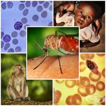 Други видове паразитологично потвърдена малария МКБ B53 - изображение